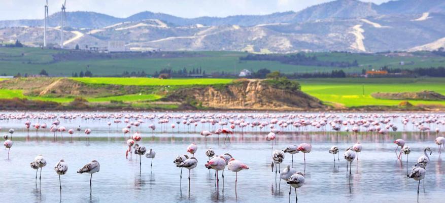 """Σχέδιο Κατάρτισης """"React-Act-Prevent"""" 12-19 Μαΐου, Κύπρος"""